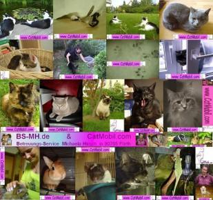 Mobiles Tier-  und Haussitting
